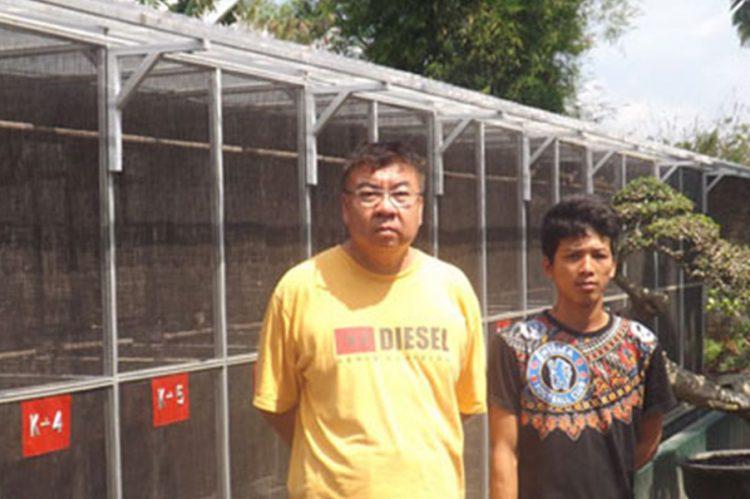 Perkutut Di Yogyakarta